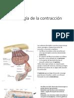 Fisiología de la contracción.pptx