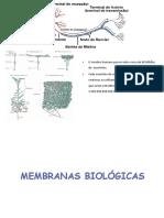 membrana e transporte.pdf