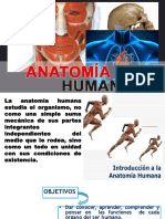 Anatomia Modificadoo