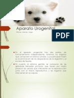 Aparato Urogenital del Perro
