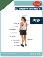 Cuerpo Humano2
