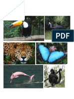 amazon river flora and fauna