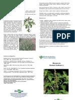 folder-manjericao.pdf