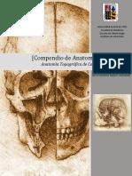 Anatomia Cabeza Cuello Universidad Austral Chile