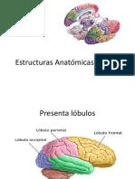 Estructuras Anatómicas Del SNC