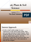 beef cattle ppt