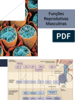 FIsiologia - funções reprodutivas masculinas