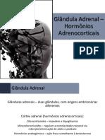 Fisiologia - 21 - Glândula Adrenal