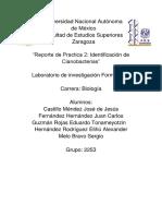 Practica Identificacion de Cianobacterias