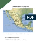 Aguacate Organico en Mexico