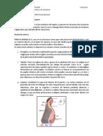 Guía de Estudio Del Casco Equino