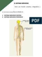 Resumen Stma Nervioso