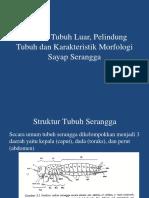 Struktur Tubuh Serangga.pptx