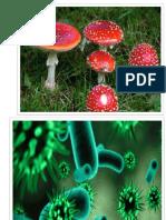 Imagenes de Ecosistema