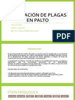 Evaluación de Plagas en Palto