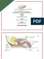 histologia shenia