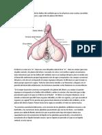 la vulva 9