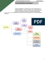 Bacterial ID Flowchart