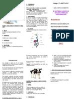 96189343-Triptico-Del-Sistema-Digestivo-de-Vertebrados.doc