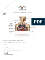 prueba-sistema-respiratorio.doc