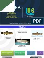 Trucha.pptx
