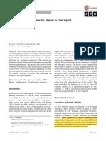 Pseudomalaria in a Domestic Pigeon- A Case Report