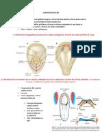 Embriologia en Sistemas