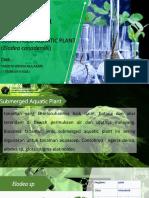 Yasinta-persentasi tumbuhan air.pptx