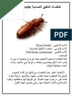 خنفساء الدقيق الصدئية Flour beetle.doc