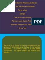 A.huerta Present.fotosin