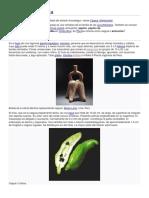 Cyclanthera pedata