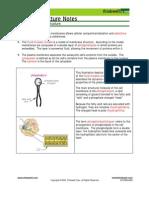 Bio Notes 3.1.4 Membranes