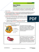 Bio Notes 3.2.5 Mitochondria