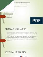 EXPOCICION DE ANATOMIA.pptx