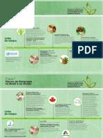 C1 E1 Infografico Marcos Da Fitoterapia