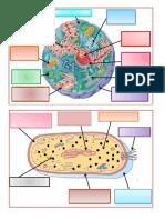 Celulas en Dibujos