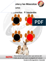 Protocolo Mascotas