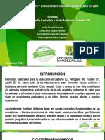 Trabajocolaborativo Ciclosybiomas Ecologiawiki2 161128003143