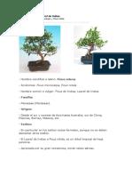 Ficus de Indias