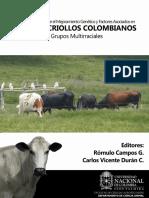 Criollos colombiano