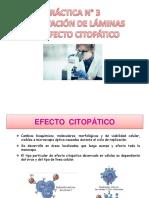EFECTO CITOPÁTICO.pptx