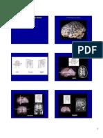 Lecture03_BrainAnatomy