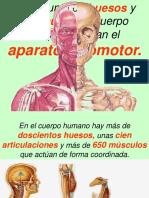 Presentacion Huesos y Musculos