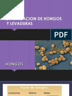 Clasificacion de Hongos