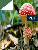 Cogumelos Vermelhos Imagens Imagem