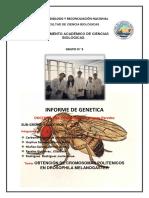 INFORME-PRACTICO-DE-LARVAS-DE-DROSOPHILA-MELANOGASTER.docx