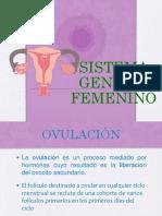 Sistema Genital Femenino