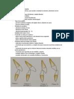 Resumen de Ortodoncia PARCIAL 2