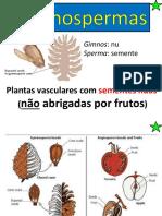 7 Plantas Gimnospermas