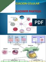 diferenciacioncelular-140902131712-phpapp01